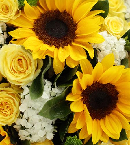 阳光灿烂-向日葵3枝、金枝玉叶黄玫瑰19枝