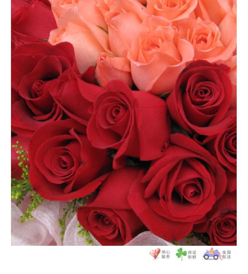 完美的爱-33枝粉玫瑰居中,66枝红玫瑰围绕,5寸小熊一只-鲜花速递
