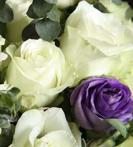 北极雪-雪山白玫瑰19枝,紫色桔梗3枝