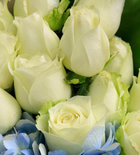 雪山之舞-雪山白玫瑰19枝