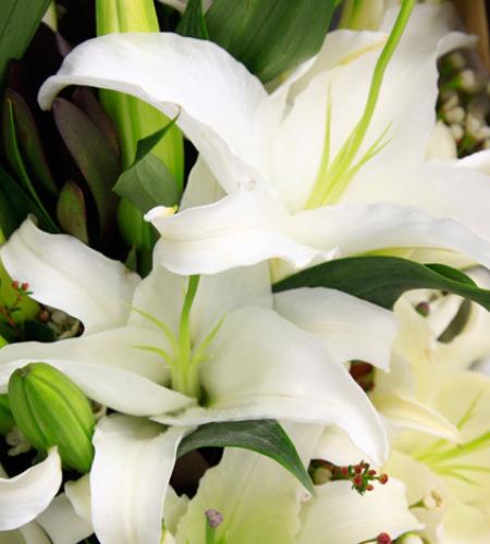 青青子衿-白色多头香水百合6枝