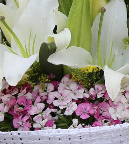 快乐无限-11朵白色多头香水百合