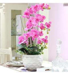 五枝紫色一品蝴蝶兰(白色波浪圆型花盆)