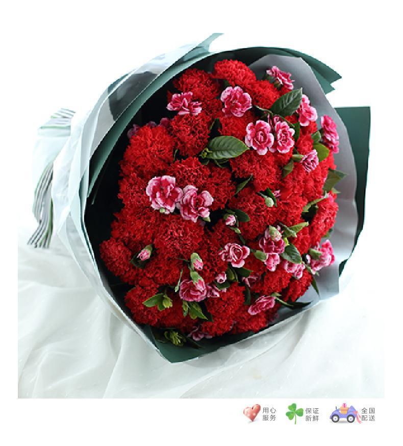 幸福万年长-红色康乃馨66枝,白边紫色多头康乃馨15枝,栀子叶2扎-鲜花速递